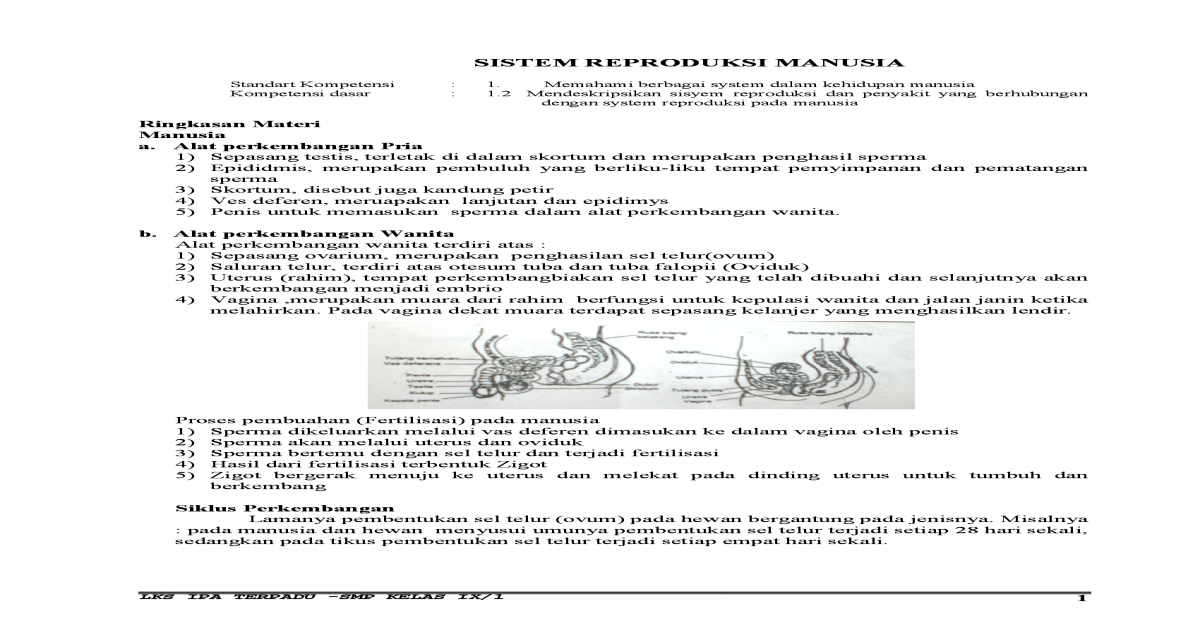 Sistem Reproduksi Manusia Doc