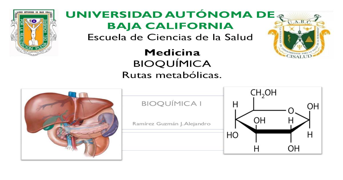 Metabolismo basal más rápido al usar estos simples consejos