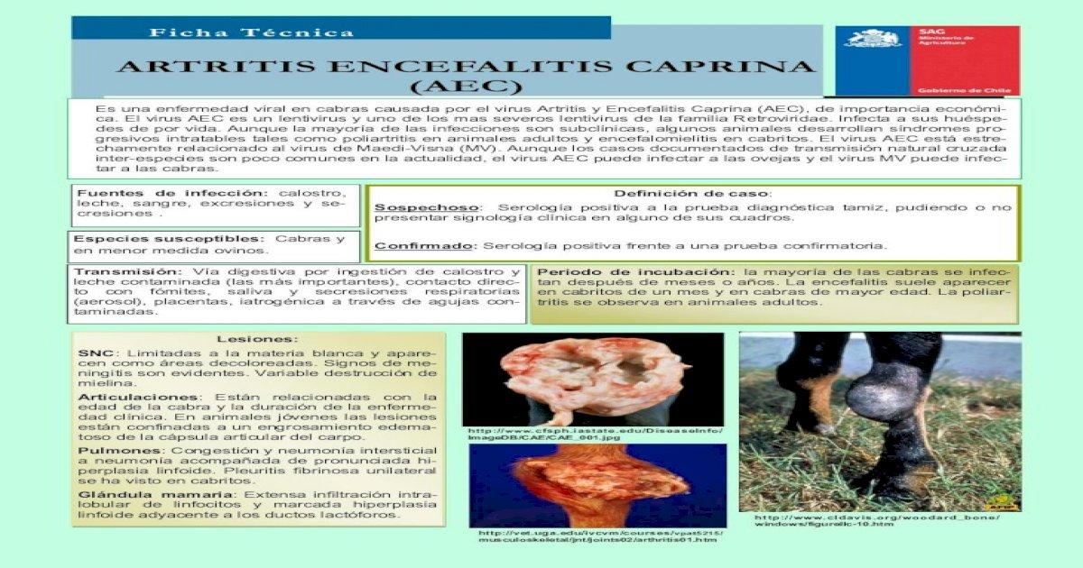 artritis encefalitis caprina pruevas de laboratorio
